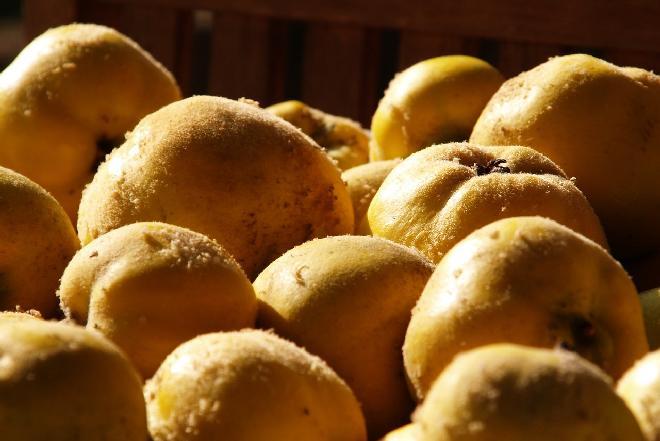 Polskie odpowiedniki superfood - modnego i wartościowego jedzenia